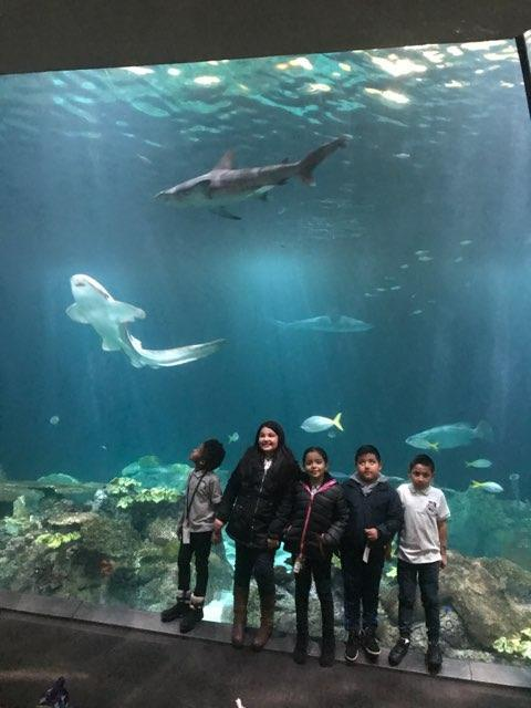 Discovering the Shedd